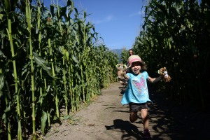 You need more corn maze in your life! ;)