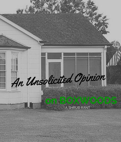 Palestine Realtor Opinion on Boxwoods